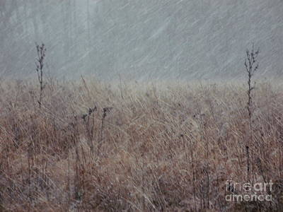 Photograph - The Winter Wind by Photography by Tiwago