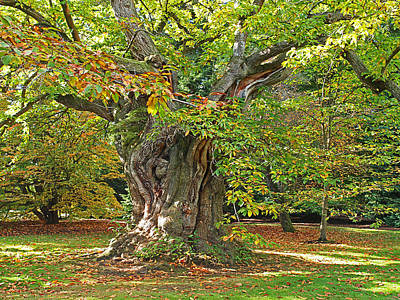 Photograph - The Wise Old Tree by Gill Billington