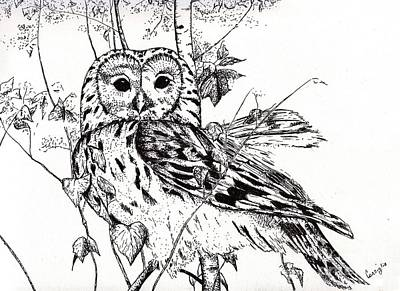 Ink Drawing Drawing - The Wise Owl by Celia Fedak