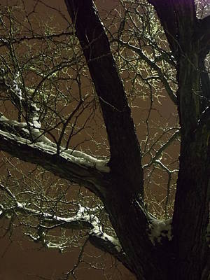 Photograph - The Wise Trees Stand Sleeping by Guy Ricketts
