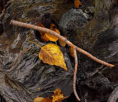 Photograph - The Wishbone by Paul Breitkreuz