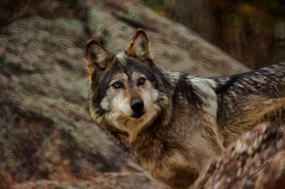 Canines Digital Art - The Wolf 5 by Ernie Echols
