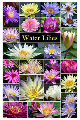 Art Print featuring the photograph The Wonderful World Of Water Lilies by Cindy McDaniel