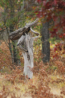 Photograph - The Wooden Tree Stump by Danielle Allard