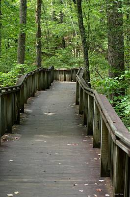 Photograph - The Woodland Boardwalk by Maria Urso
