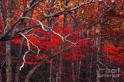 The Woods Aflame In Red Art Print by Paul W Faust -  Impressions of Light