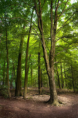 Photograph - The Woods - Enchanted Forest by Gary Heller