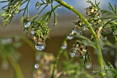 The World In A Drop Of Water Art Print by Peggy Hughes