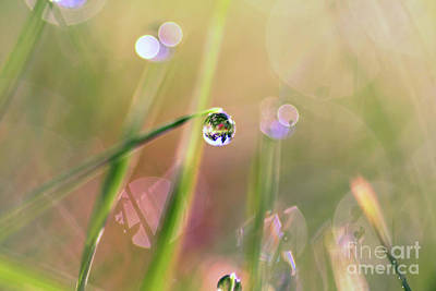 The World In A Drop Art Print by Sylvia Cook