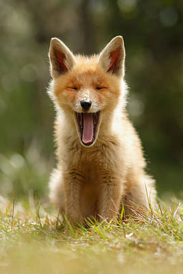 The Yawning Fox Kit Art Print by Roeselien Raimond