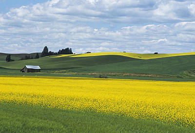 Contour Farming Photograph - The Year Of Canola by Latah Trail Foundation