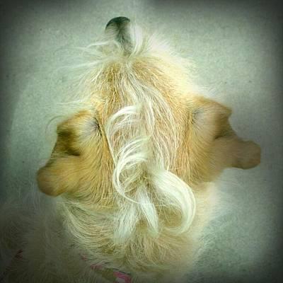 Foxhound Photograph - The Yellow Dog Awaits by Greg Kopriva