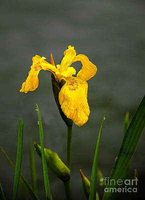 Photograph - The Yellow One by Robert Bales