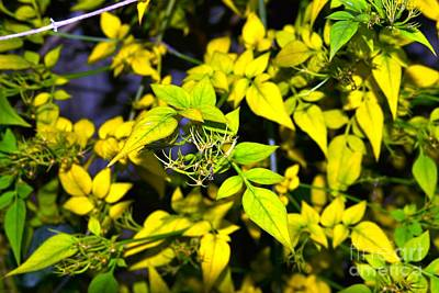Photograph - The Yellow Plant by Aqil Jannaty