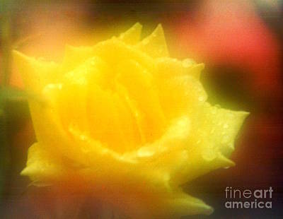 Photograph - New Orleans  Yellow Rose Of Tralee by Michael Hoard