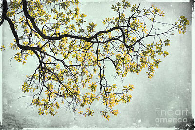 Photograph - The Yellow Tree by Sharon Kalstek-Coty