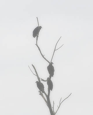 Vulture Digital Art - Their Waiting Four Black Vultures In Dead Tree by Chris Flees