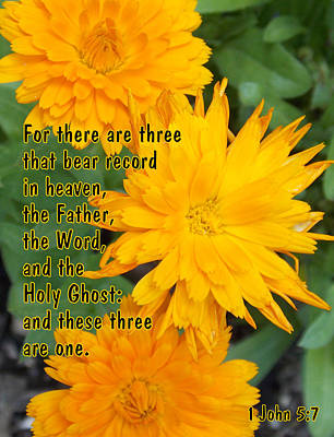 Photograph - There Are Three by Sheri McLeroy