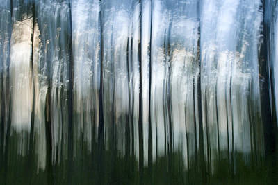 Photograph - There Is Unrest In The Forest by Beverly Stapleton