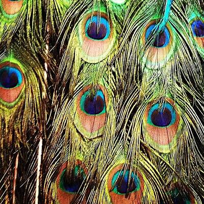 Colorful Photograph - Peacock Feathers by Blenda Studio