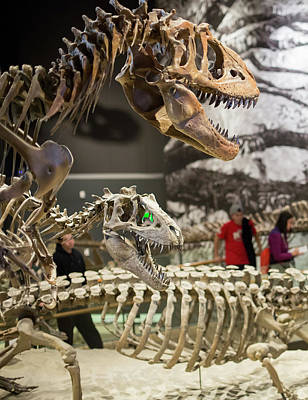 North American Wildlife Photograph - Theropod Dinosaur Fossils Display by Jim West