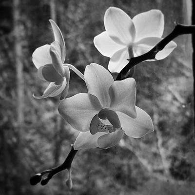 Orchids Photograph - These #orchids Again by Jess Ames