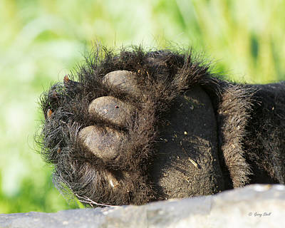 Photograph - These Paws Are Made For Walkin by Gerry Sibell