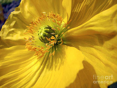 Photograph - They Call Me Mellow Yellow by Chris Anderson