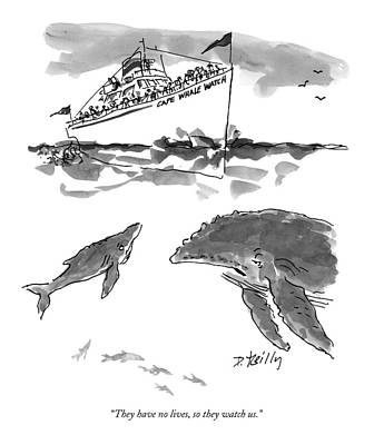 Humpback Whale Drawing - They Have No Lives by Donald Reilly