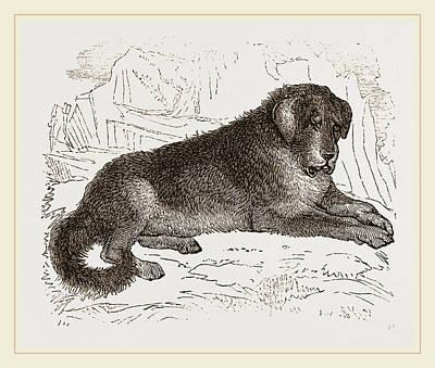 Thibet Watch-dog Art Print by Litz Collection