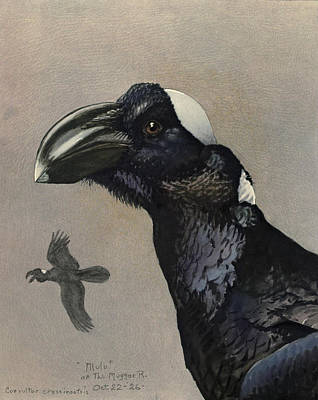 Ethiopia Painting - Thick Billed Raven by Rob Dreyer