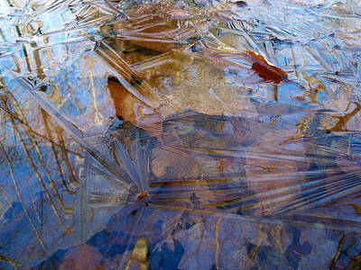 Photograph - Thin Ice by David Pickett