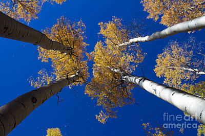 Photograph - Things Are Looking Up by Jim McCain