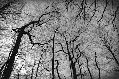 Photograph - Things Change by Taylan Apukovska