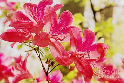 Photograph - Think Spring by Chris Scroggins