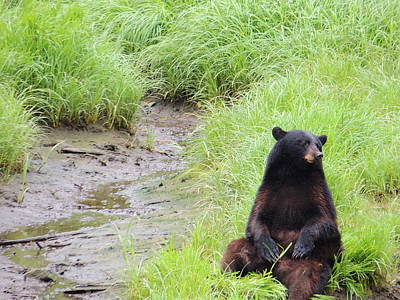 Photograph - Thinking Bear by Karen Horn