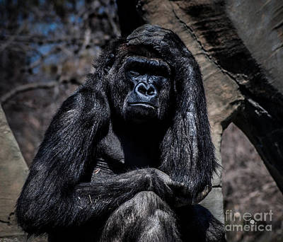 Photograph - Thinking Gorilla by Ronald Grogan