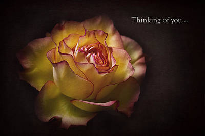 Dear Friend Photograph - Thinking Of You... by Kim Andelkovic