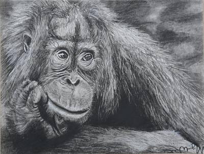 Orangutan Drawing - Thinking Orangutan by Megan Wood