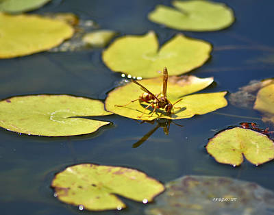 Photograph - Thirsty Bee On Lily Pad by Allen Sheffield