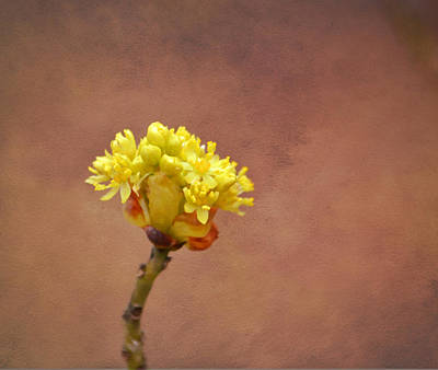 Photograph - This Bud's For You by Deena Stoddard