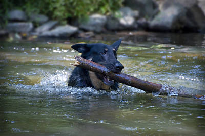 Dog Photograph - This Dog Loves To Play Fetch by Bill Cannon