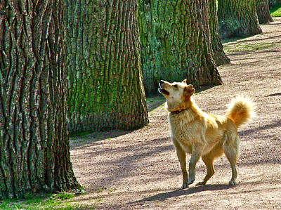 Catherine Palace In Russia Photograph - This Dog Thinks He Has Treed A Squirrel In Catherine's Palace Grounds In Pushkin-russia by Ruth Hager
