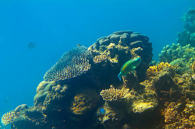 Australia Photograph - This Is Why They Call It The Great Barrier Reef by Mr Bennett Kent