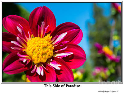 Photograph - This Side Of Paradise by Tikvah's Hope