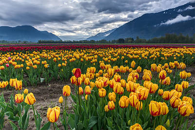 Agassiz Photograph - This Years Agassiz Tulip Festival by James Wheeler
