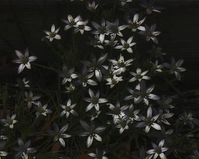 This Year's Bloom Original