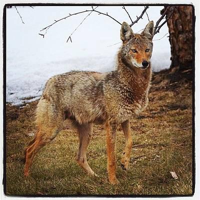 Animals Wall Art - Photograph - Urban Coyote by Heidi Hermes