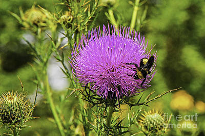 Photograph - Thistle And Bee by Mary Carol Story