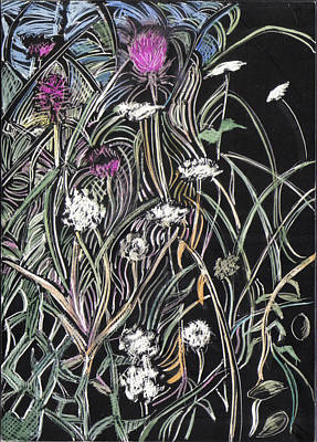 Maine Meadow Drawing - Thistle And Queen Anne by Grace Keown